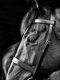 Equine Photographer UK