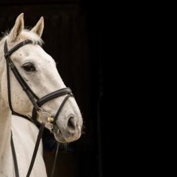 Horse Photographer IOM