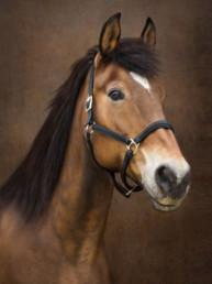 Horse Photographer IOM UK