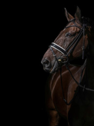 Horse_Photographer_UK_Sarah_Jewell-1