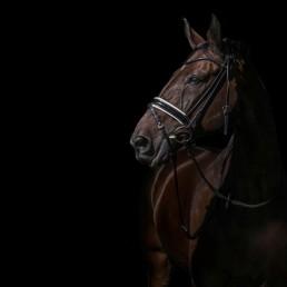 Horse_Photographer_UK_Sarah_Jewell-1