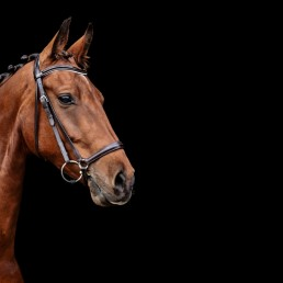 Horse_Photography-2