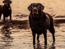 Dog Photographer UK IOM