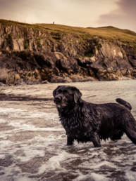 Dog Photographer UK IOM