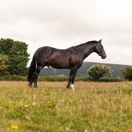 Pet Photography Isle of Man