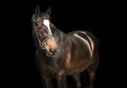 Equine Photographer IOM
