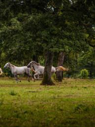 Horse Photographer UK
